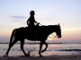 Horseback Tour � GorilaX Jungle Park